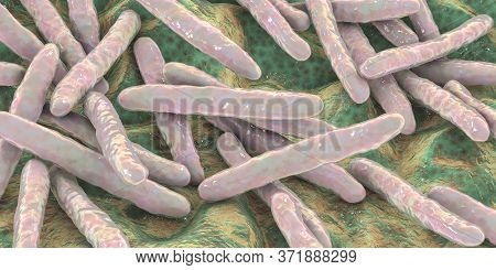 Bacteria Mycobacterium Tuberculosis, The Causative Agent Of Tuberculosis, 3d Illustration, Can Be Us