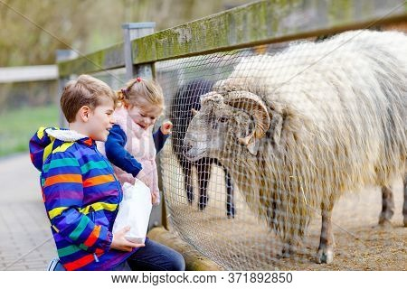 Two Children Cute Toddler Girl And School Kid Boy Feeding Little Goats And Sheeps On A Kids Farm. Ha