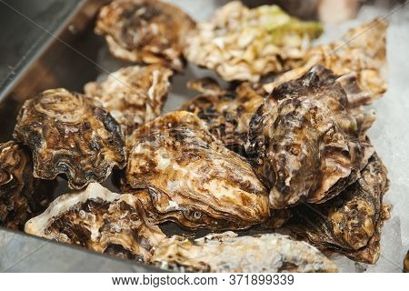 Fresh Oysters At Showcase. Oyster Shells, Close Up. Healthy Seafood Concept. Fish Market Showcase Fu