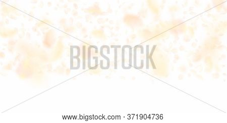 Yellow Orange Flower Petals Falling Down. Authentic Romantic Flowers Gradient. Flying Petal On White