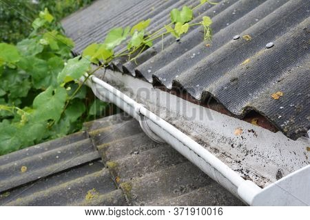 A Plastic Rain Gutter On An Asbestos Rooftop Is Cleaned From Fallen Leaves, Dirt And Other Debris To