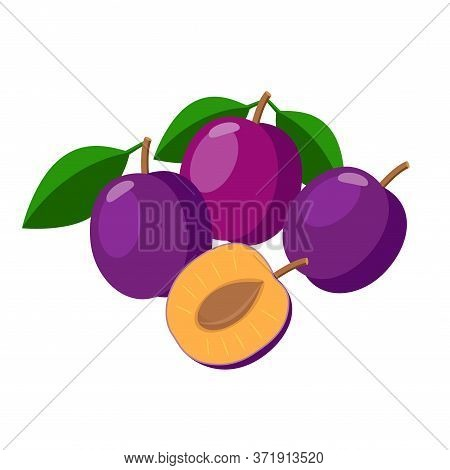 Plums Vector Illustration Isolated On White Background. Juicy Purple Plum Fruits.