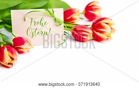 Frohe Ostern, Which Means Happy Easter In German On White Paper Card. Red And Yellow Stripy Tulips O