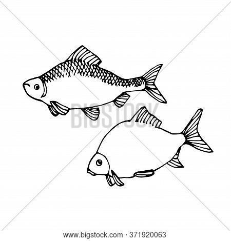 Set Of Freshwater Fish, Roach, Bream, For Decorative Ornaments And Patterns, Vector Illustration Wit