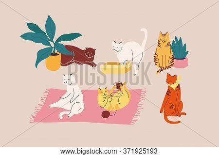 Vector Illustration Set Of Adorable Catsn In Different Poses Sleeping, Stretching Itself, Playing Wi