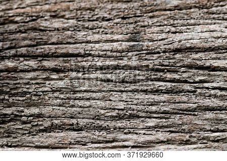 Embossed Texture Of The Brown Bark.tree Bark Texture. Seamless Bark Tree Texture. Texture Of Bark Wo