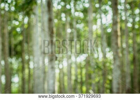 Blur Nature Bokeh Green. Out Of Focus, Rubber Forest And Sunlight. Forest Bokeh And Blur Background.