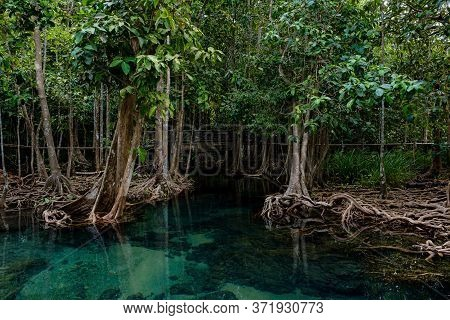 National Park In Krabi Province, Thailand With Mangrove Forests