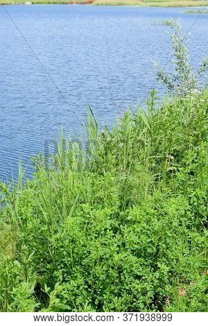 Water Surface And Lake Shoreline With Overgrown Grass