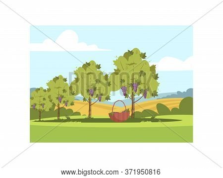 Grapewine Seasonal Crop Semi Flat Vector Illustration. Harvest For Local Winery Production. Countrys