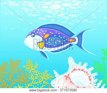 Exotic Multi Colored Parrotfish Swimming Over A Quaint Shell Among Thick Branches Of Colorful Corals