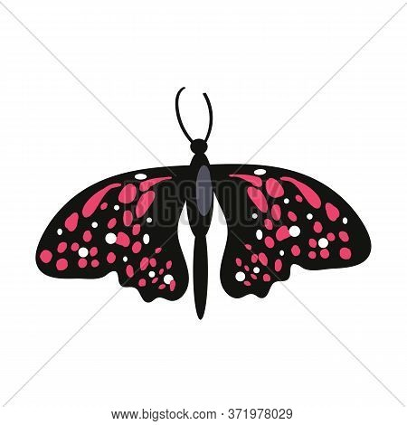 Swallowtail Butterfly Isolated . Butterfly Garden, Entomology, Lepidoptera, Insects Concept. Can Be
