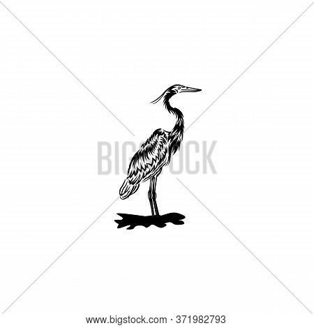 Flamingo Vector Isolated On White Background From Wildlife Collection, Flamingo Vector Trendy And Mo