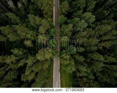 Asphalt Road Through The Green Forest. Summer Landscape. Top View. Drone Photo