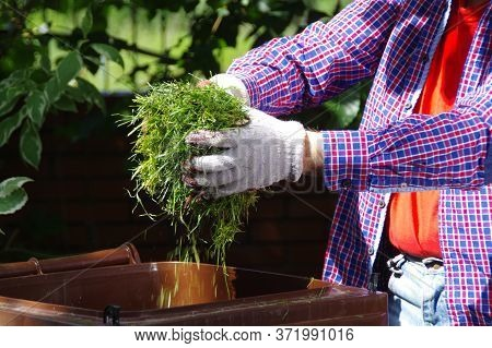 Green Waste Segregation. A Gardener Throwing Green Hay Into A Bio Recycling Brown Bin. Ecology And T