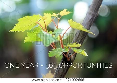 Inspirational Motivational Quote - One Year Is 365 Opportunities. With New Plant Growth On Vine Back
