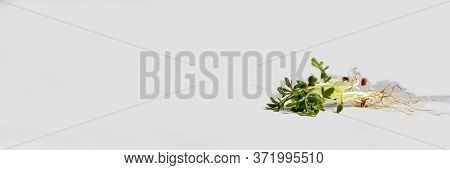 A Bunch Of Young Sprouts Of Cressalate On A White Background. Fresh Organic Plant Vegetables. Green