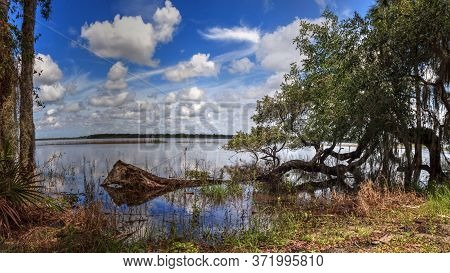 Seasonal Flooded Swamp Of Myakka River State Park In Sarasota, Florida.