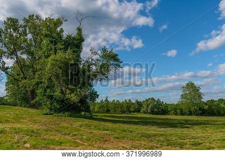 An Early Summer Landscape With Interesting Tree In Freneau Woods In Aberdeen New Jersey.