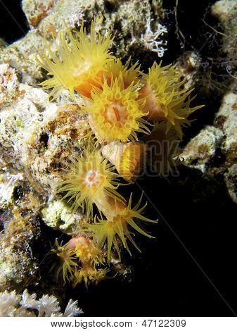 Feeding Cup Corals