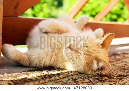 Lazy Red Cat