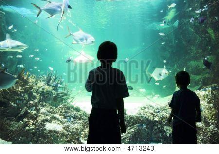 Aqua Wonder.