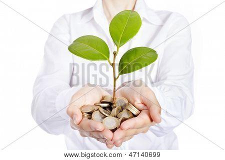 Money growing on businesswoman hands