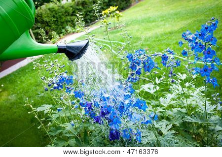 Watering Flowers On Garden, With Green Watering Can
