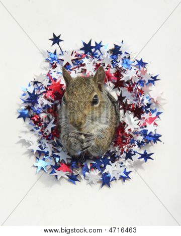 Patriotic Squirrel