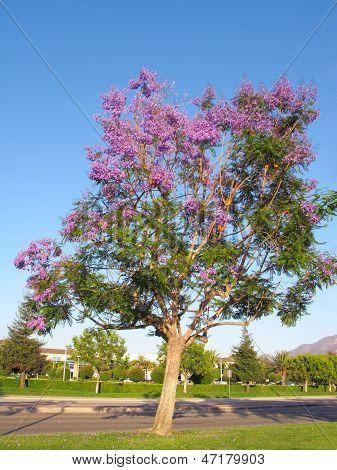 Purple-blue Jacaranda Spring Crown