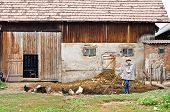 Rustic barn and yard with chickens and a scarecrow. poster
