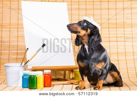 Dachshund In Hat Of Artist Near Easel With  Clean Canvas