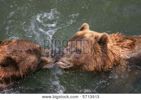 Kissing Kodiaks