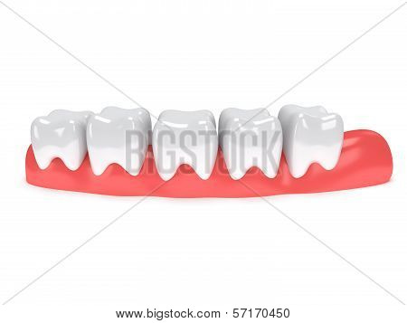 Teeth on gingiva isolated on white back.