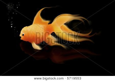 Mad Goldfish on black background with bubbles poster