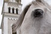Horse in front of an old church poster