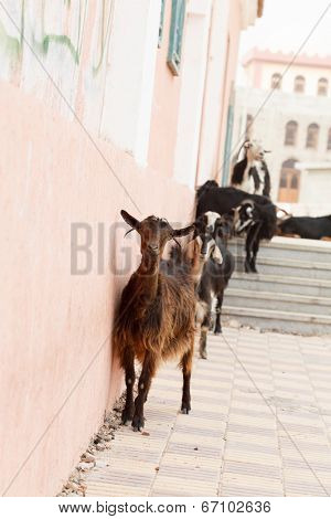 goats on the stairs poster
