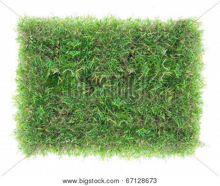 Rectangle Green Grass Texture