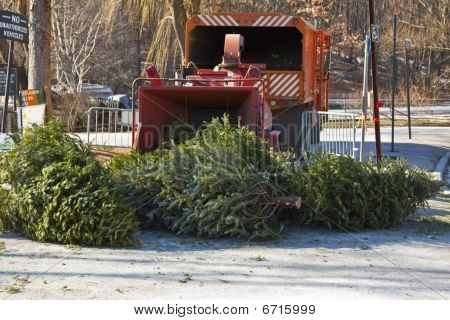 Christmas tree recycle.