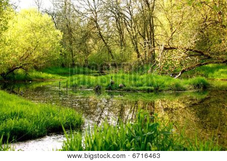 Beautiful rural wetlands pond and trees with geese poster