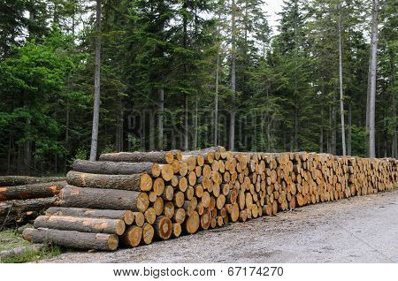 Piles Of Timber Along Road In Forest