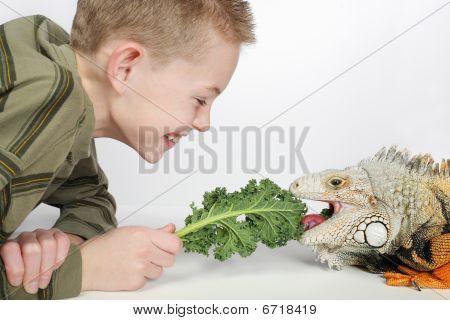 Feeding Iguana