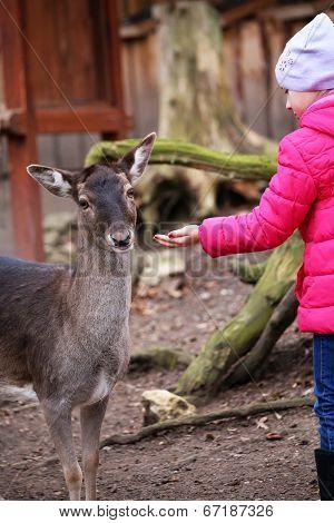 Little Girl Feeding Deer In The Zoo