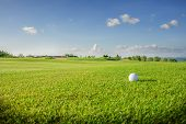 Golf club. Green golf field and ball in grass poster
