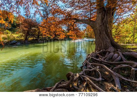 Gnarly Tree Roots and Brilliant Fall Foliage on the Guadalupe River in Texas