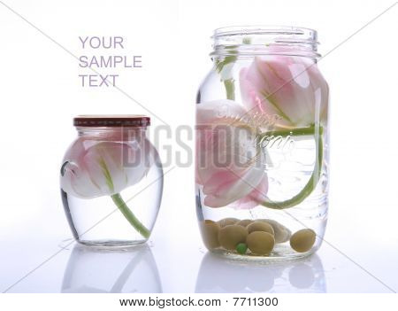 Two Beautiful Tulips In A Glass Vase