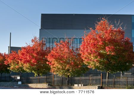 Colorful Trees In Front Of Office Building