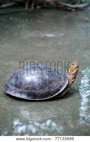 Turtle on Wet Floor