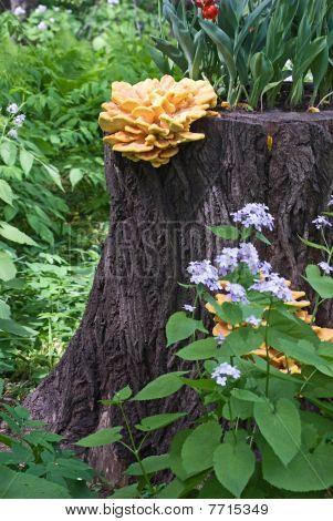 Mushroom On A Stub Of A Tree And Flowers