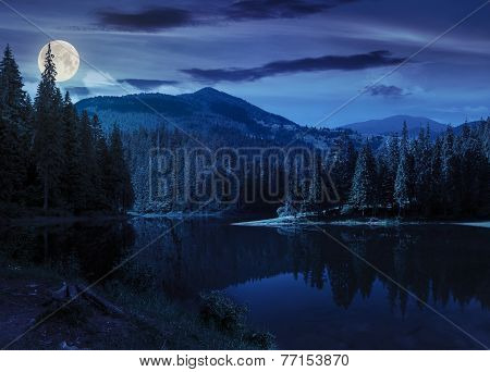 Pine Forest Near The Mountain Lake At Night